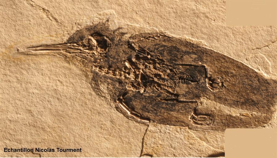 Oligocene provence - Plantes bassin de lagunage aixen provence ...